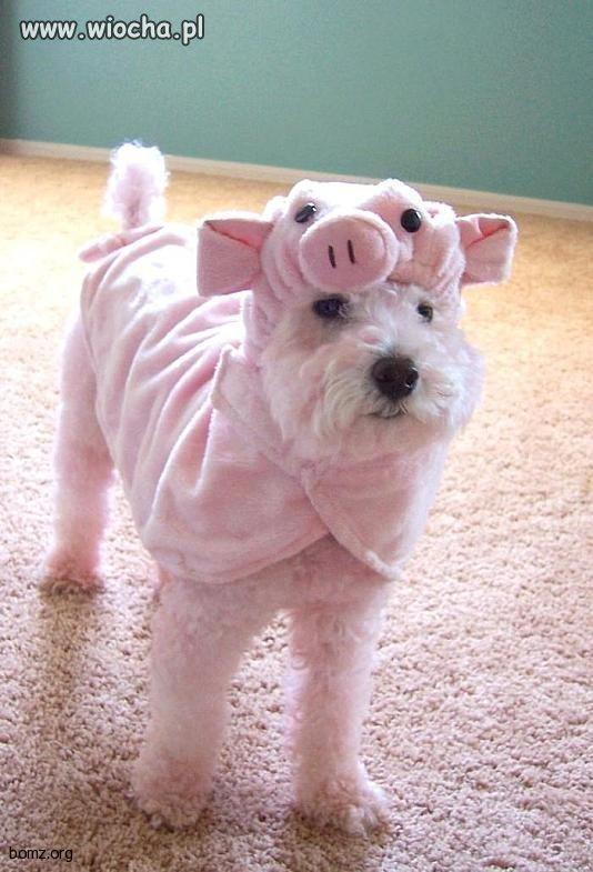Chcesz mieć świnie