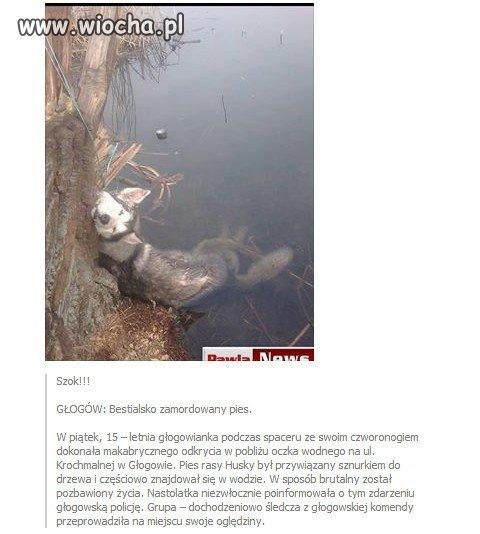 Bestialsko zamordowany pies