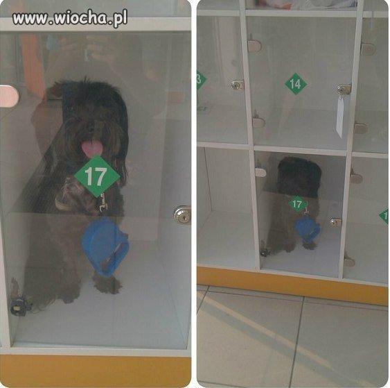 Pies w przechowalni