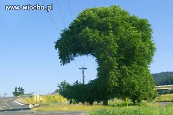 Nawet drzewo