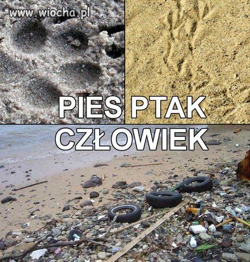 Ślady zostawione na piasku