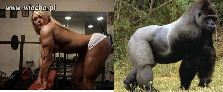Teraz wierzę, że człowiek pochodzi od małpy