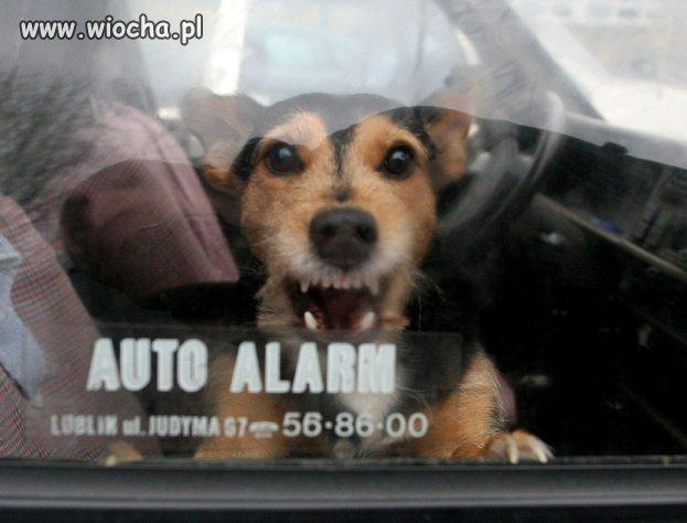 Uratował psa z rozgrzanego samochodu, teraz STANIE