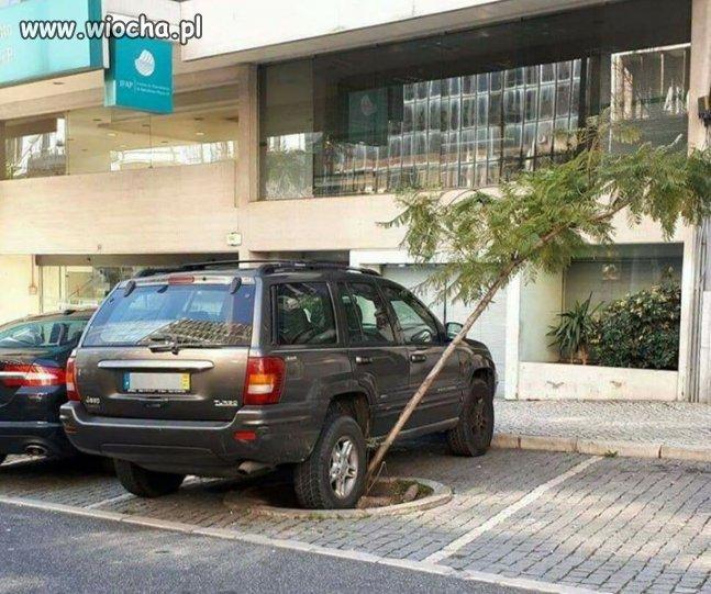 Mistrz parkowania.
