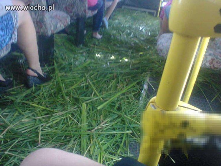 Trawa w autobusie
