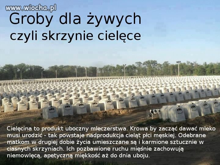 Groby dla żywych...