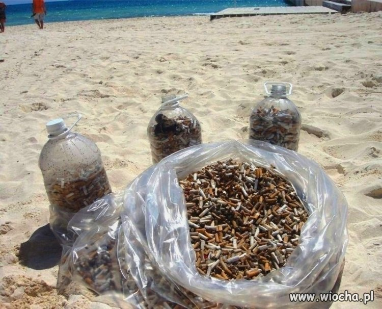 Petunie plażowe