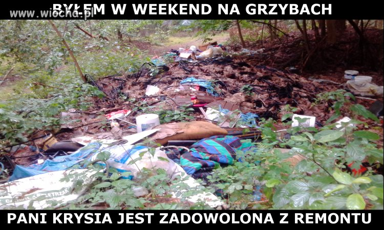 Weekend na grzybach