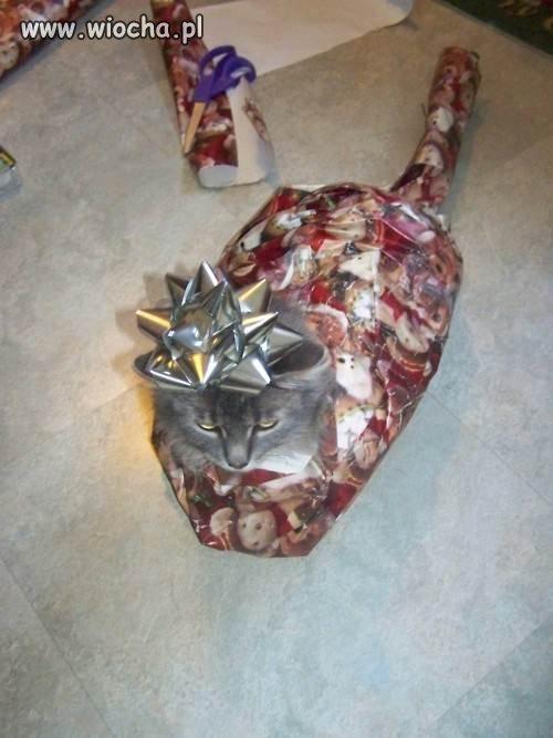 Zapakowany kot