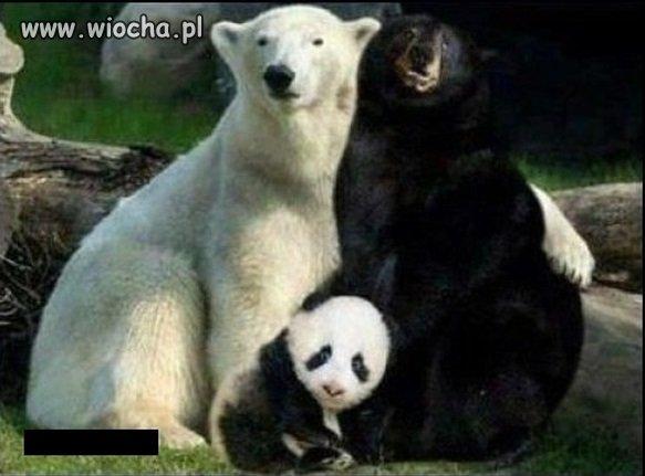 Wyjaśniła się sprawa pandy.
