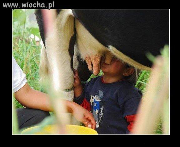Najzdrowsze mleko prosto od krówki.