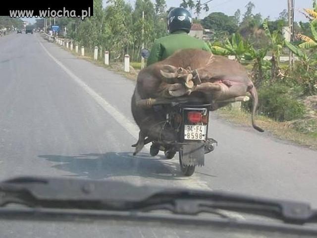 Co można przewozić na motorku ???