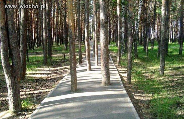 Ścieżka z przeszkodami