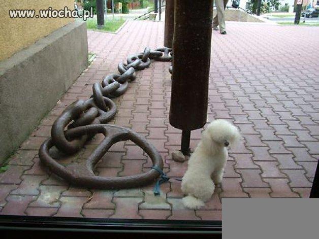 """""""Pies łańcuchowy""""..."""