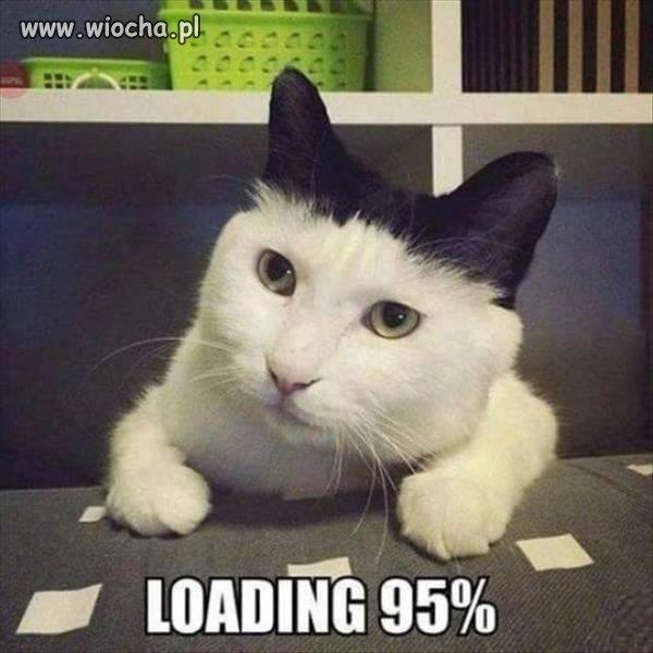 Kotek prawie pełny