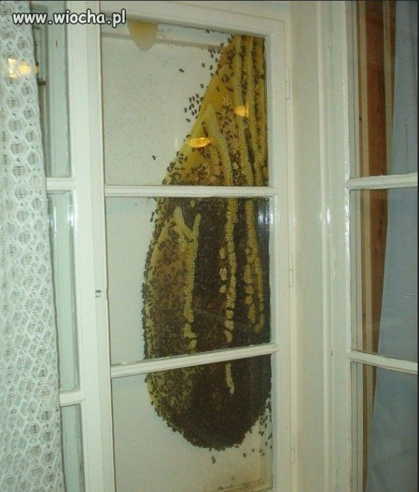 Własny (ul) miód za oknem