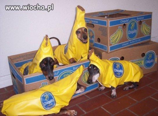 Już nie są nam potrzebne hostessy do promowania bananów