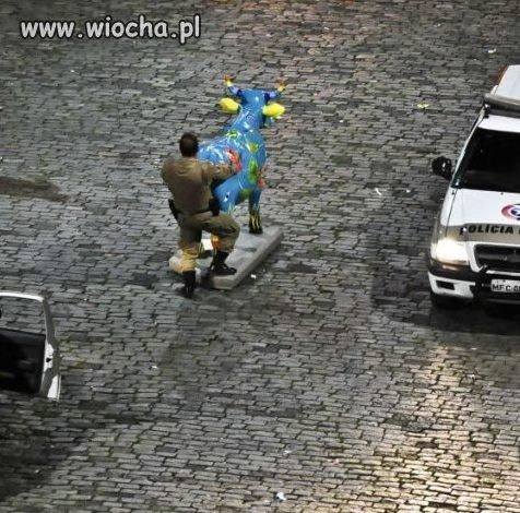 Pan policjant w akcji