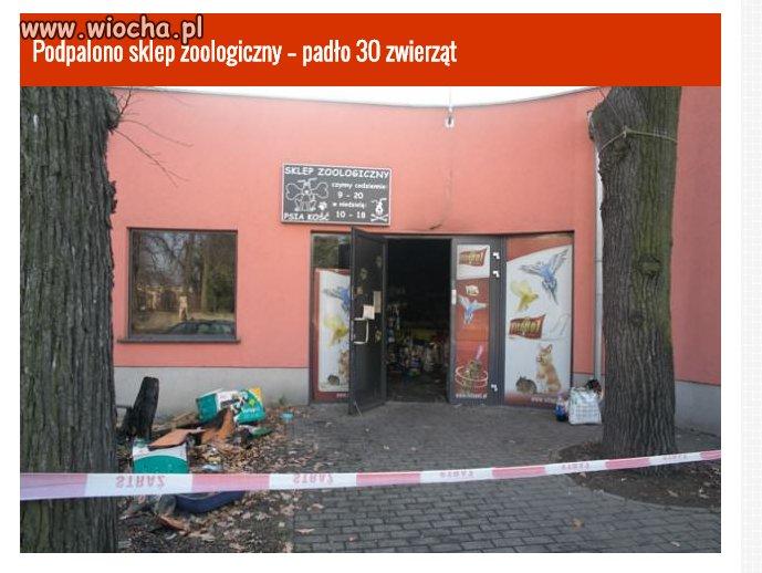 Podpalono sklep zoologiczny