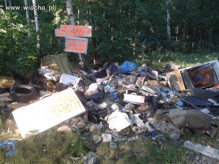 Takie tam śmieci w lesie