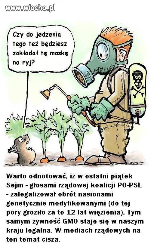 Już niedługo genetycznie modyfikowana żywność
