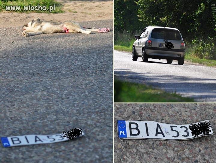 Ten kierowca zabił młodego i głupiego psiaka
