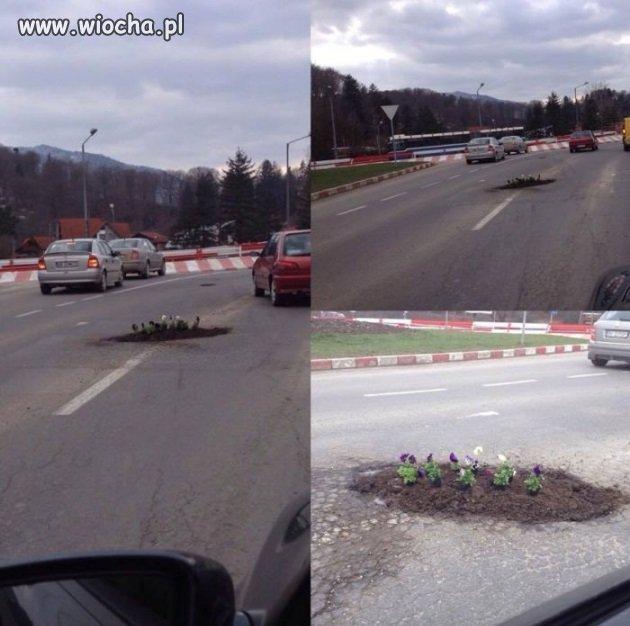 Ktoś posadził kwiatki na drodze