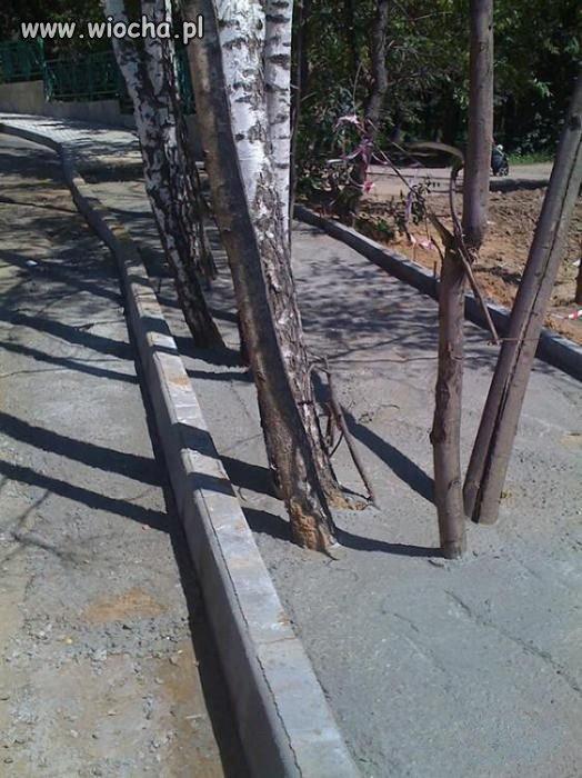 Brak zezwolenia wycinki drzew