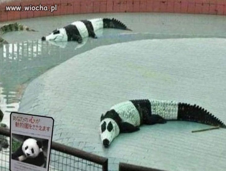 Pandy...