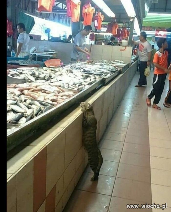 Dajże rybkę, dobry człowieku