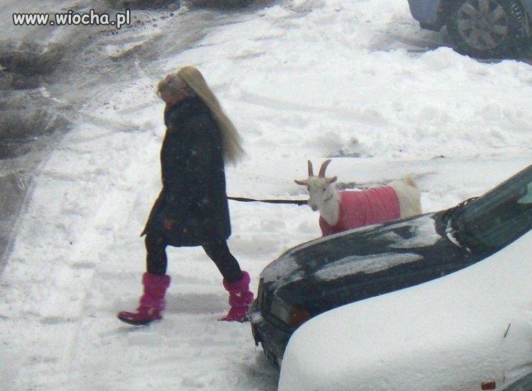 Moda na Kozy