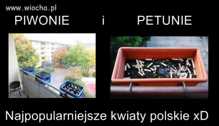 Najpopularniejsze kwiaty polskie