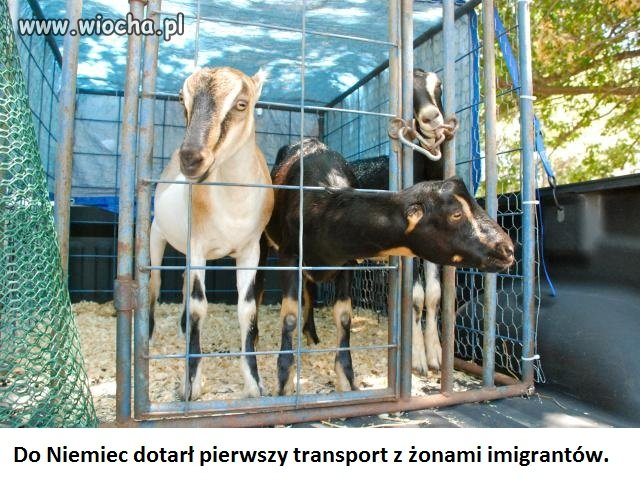 Transport z żonami imigrantów