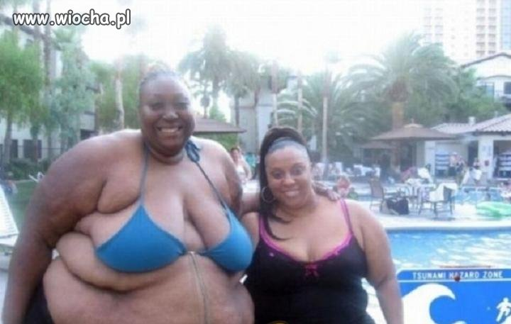 Foczki  na basenie