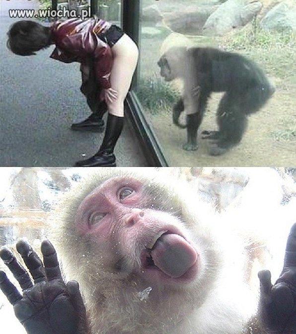 Co się dziwić zwierzętom