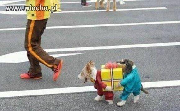 Żal psiaka