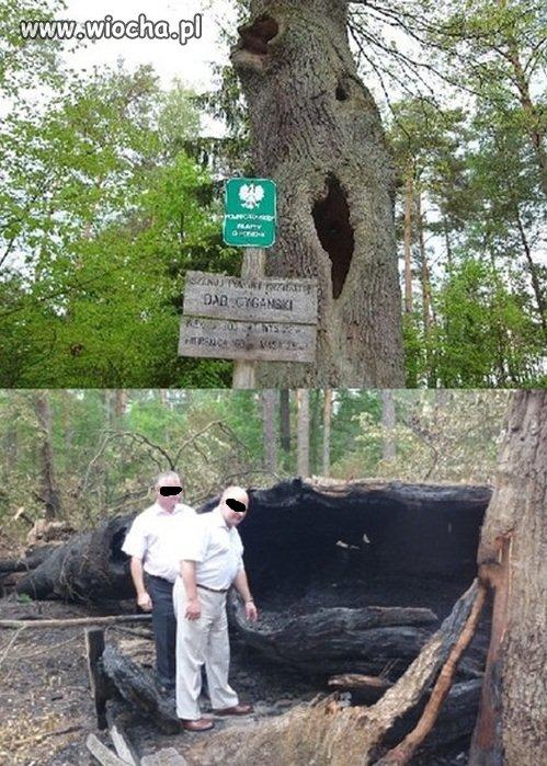 Dla checy podpalili pomnik przyrody