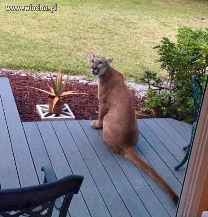 Jakiś bezpański kotek wlazł mi na ganek