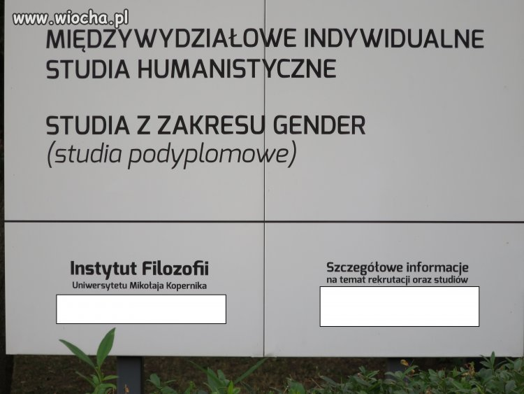 Studia z zakresu Gender