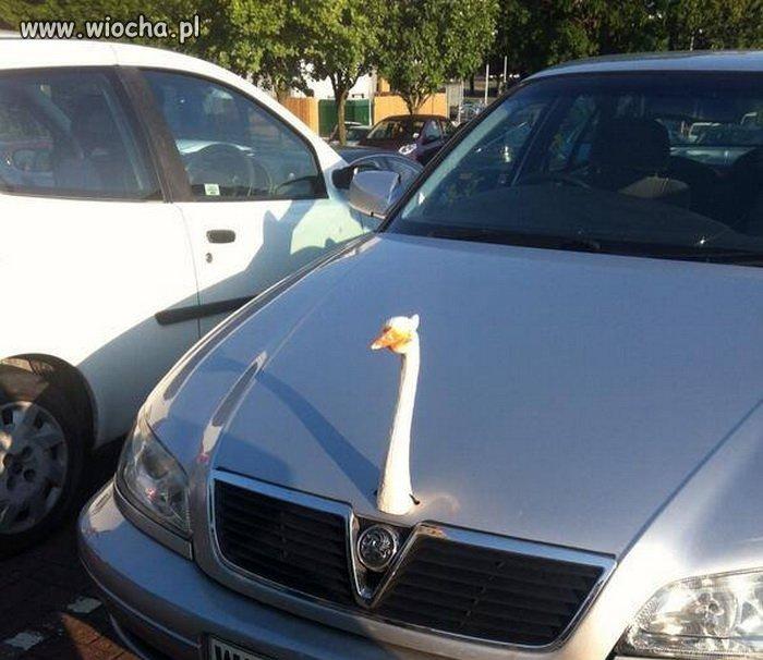 Nowa marka auta