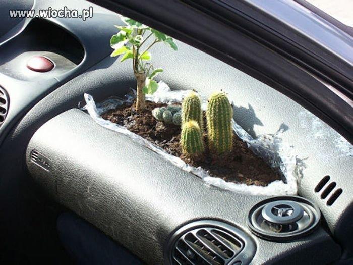 Samochodowy ogródek