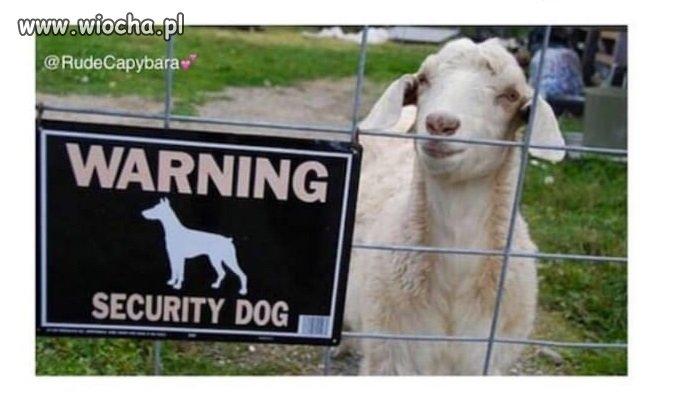 Bo pies jest niewierny