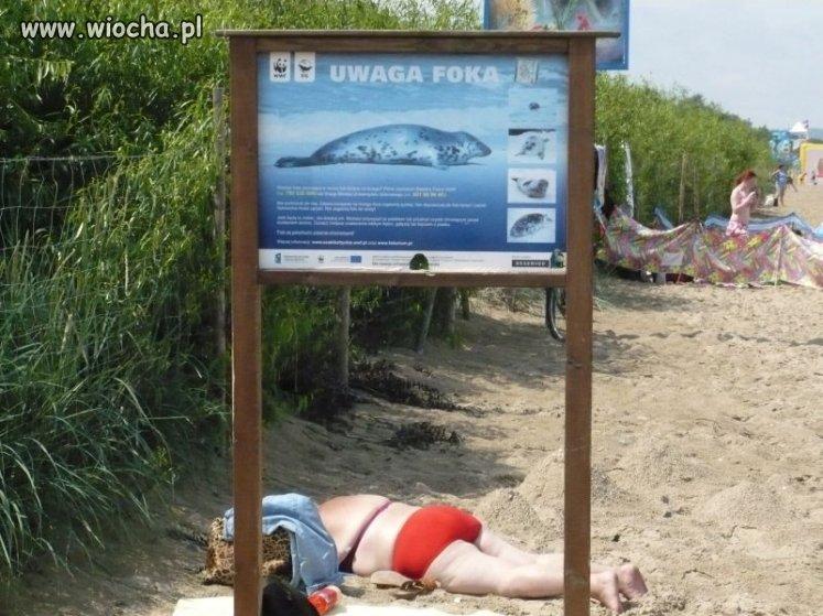 Uwaga! Gdańska foka...