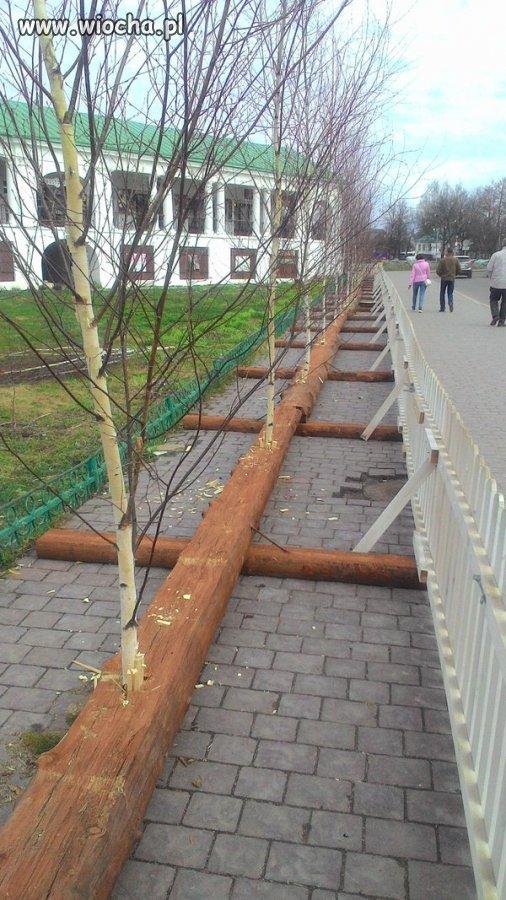 Szpaler drzew wzdłuż alei