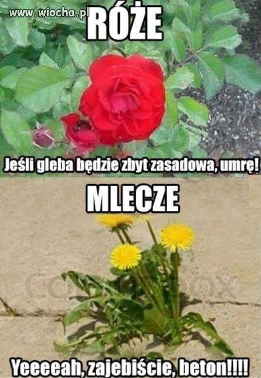 Kwiatek, który nie wybrzydza