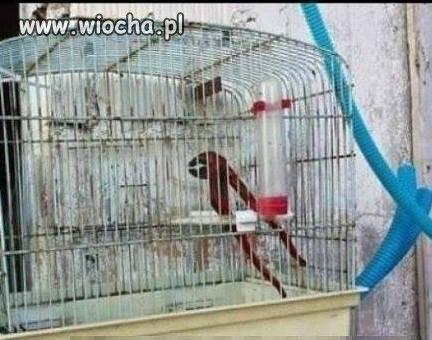 Papuga... mało gada
