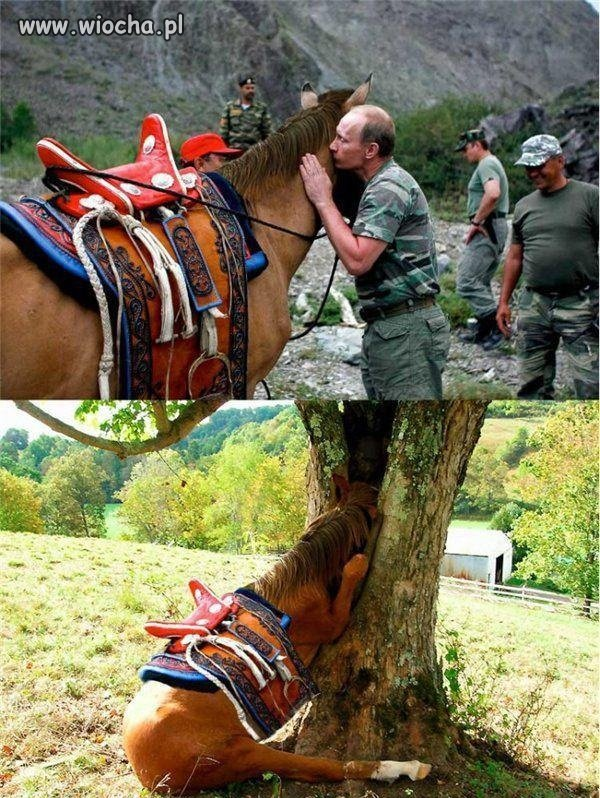 Koń po spotkaniu z Putinem