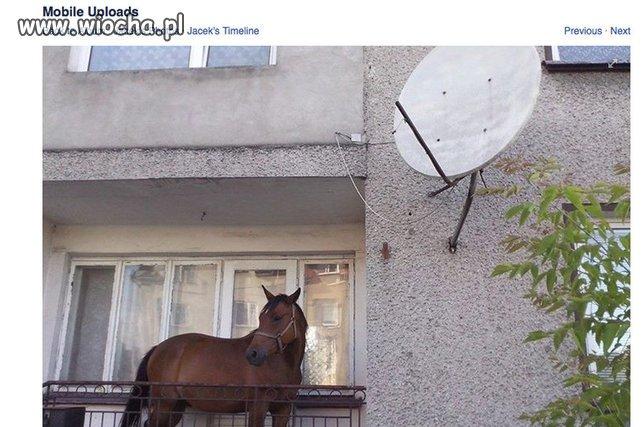 Koń na balkonie