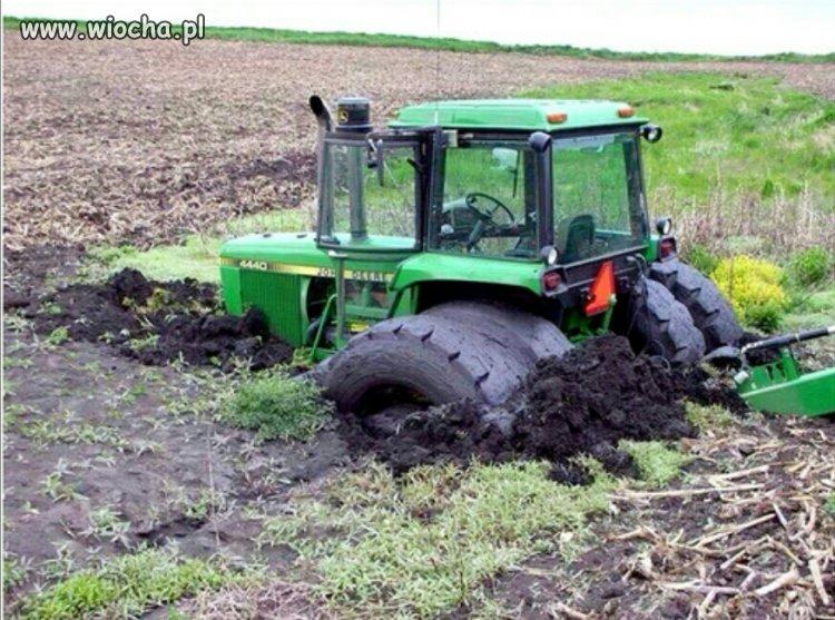 Wkrótce po roztopach samica traktora wygrzebuje