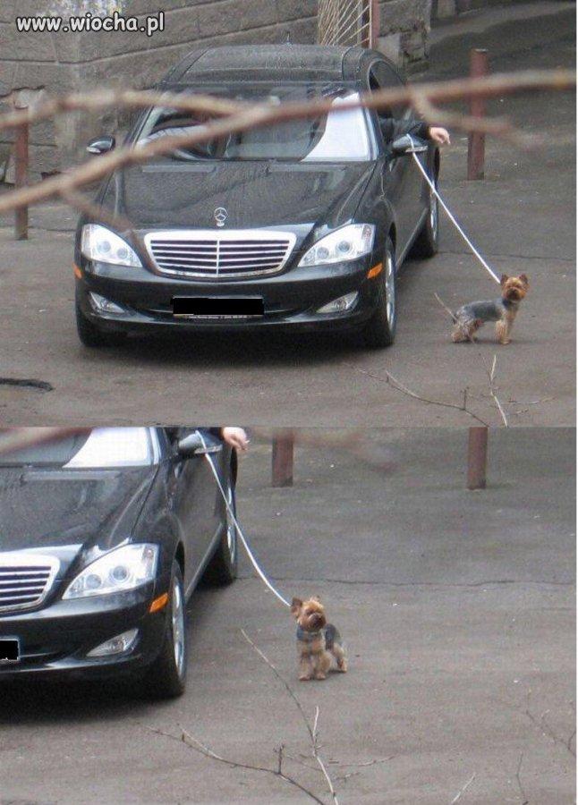 Pan wyprowadził psa na spacer
